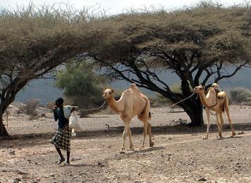 Afar Nomade in Dschibuti