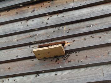 Reges Bienen-Treiben am Beobachtungsturm