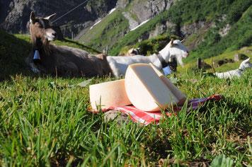 Ziegen und Ziegenkäse auf der Alp
