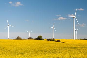 Windräder zwischen gelben Rapsfeldern