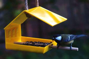 Купить кормушку для птиц шале. Красивые цветные кормушки для птиц.