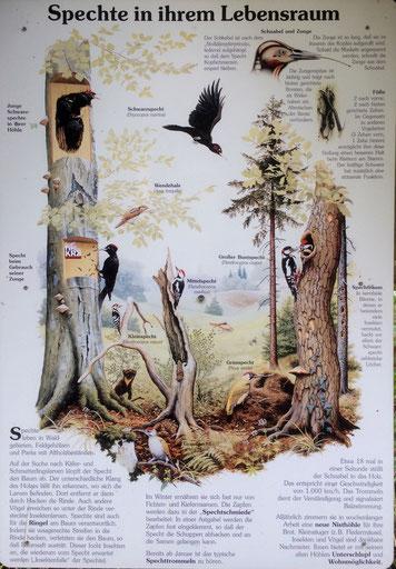 Hinweistafel im Springer Forst