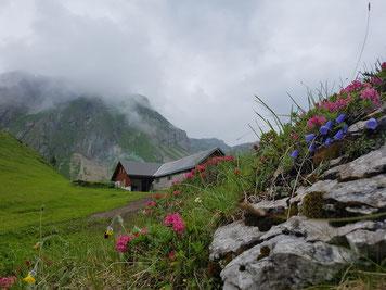 Alp Rotenbalm