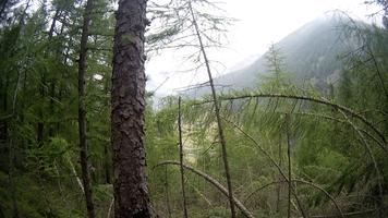 Lärche Kiefer Sturm Wald Alpen Italien Südtirol E5 Wandern Berge