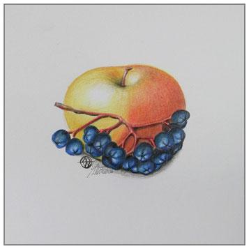 Apfel - Apfelbeere