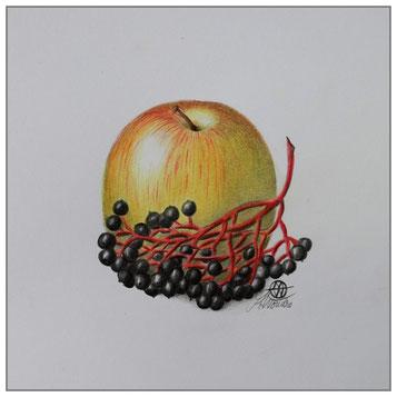 Apfel - Holunderbeere