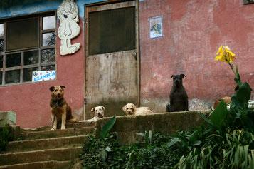 Hunde vor Animal AWARE - Tierklinik