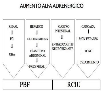 Mecanismos de adaptación fetal a la hipoxia, efecto alfa adrenérgico.