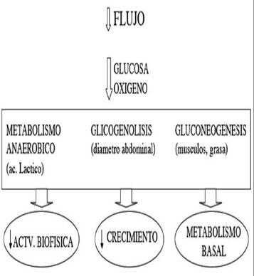 Mecanismos metabólicos de adaptación fetal a la hipoxia.