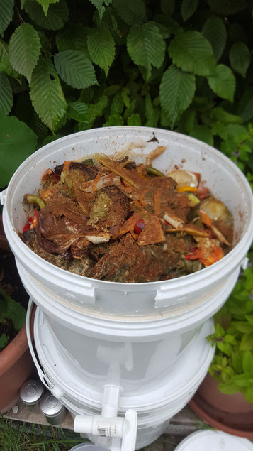 kleingeschnittene Küchenabfälle mit Bokashi-Ferment besträut