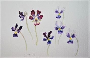 ヴィオラ Viola (Watercolor painting)
