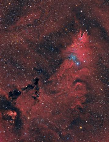 Cone Nebula - NGC2264