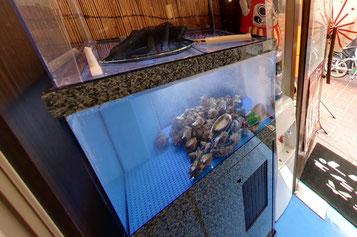 リノベーション前の活魚水槽の様子