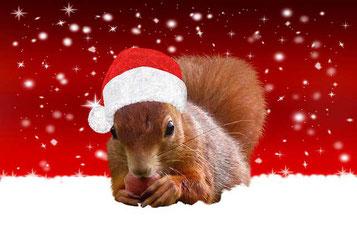 Weihnachtsgedichte Eichhörnchen