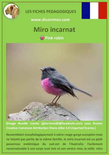fiche animaux meconnus pdf miro incarnat imprimer telecharger