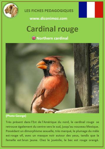 fiche animaux pdf canada cardinal rouge amerique du nord imprimer telecharger