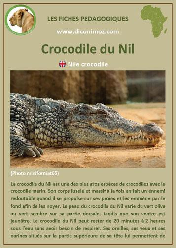 fiche animaux afrique pdf crcocodile du nil imprimer telecharger