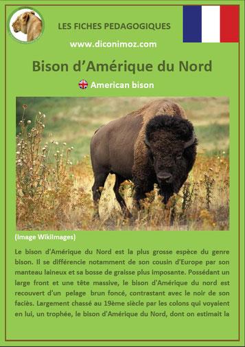 fiche animaux pdf canada bison amerique du nord imprimer telecharger