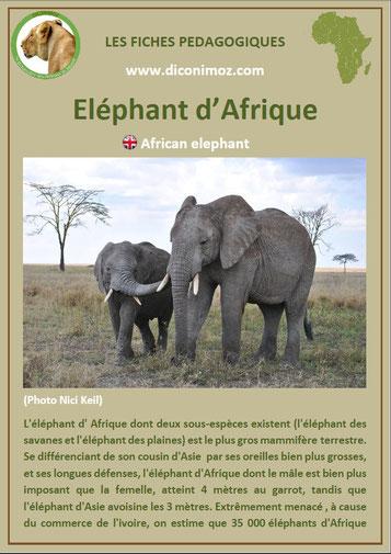 fiche animaux afrique pdf elephant imprimer telecharger
