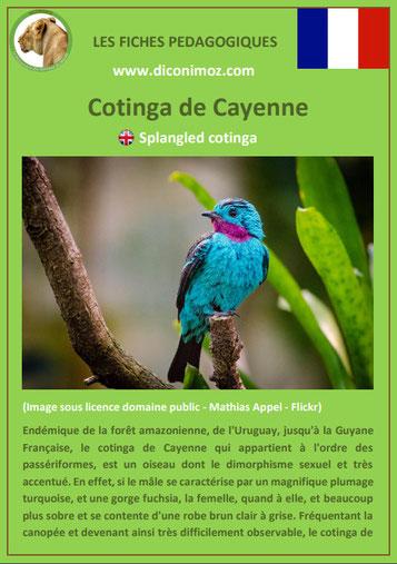 fiche animaux meconnus pdf cotinga de cayenne du nil imprimer telecharger