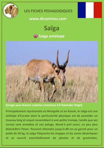 fiche animaux meconnus pdf antilope saiga imprimer telecharger