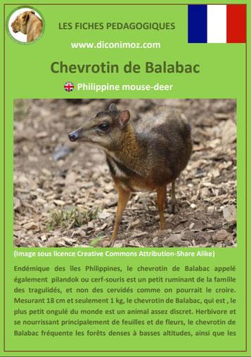 fiche animaux meconnus pdf chevrotin de balabac cerf souris imprimer telecharger