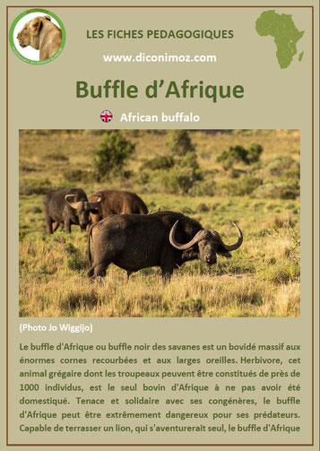 fiche animaux afrique pdf buffle imprimer telecharger