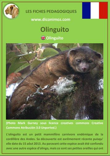 fiche animaux meconnus pdf olinguito imprimer telecharger