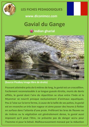 fiche animaux meconnus pdf gavial imprimer telecharger