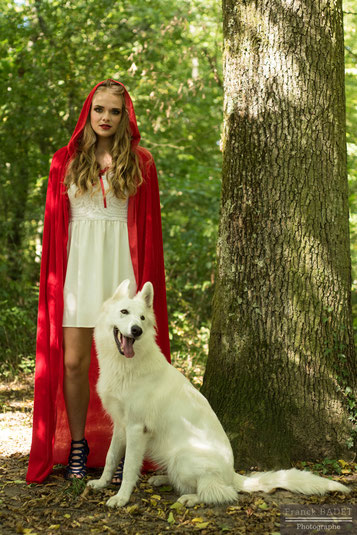 chaperon rouge berger blanc suisse chien blanc shooting photo foret