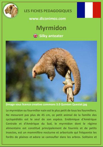 fiche animaux meconnus pdf myrmidon fourmilier nain imprimer telecharger
