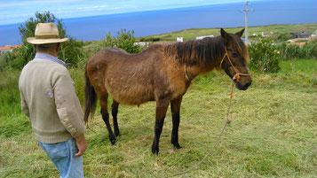 Einer der ältesten Farmer unserer Insel und seine dreißigjährige Stute