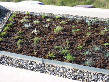 Végétalisation d'une toiture - 1ère année