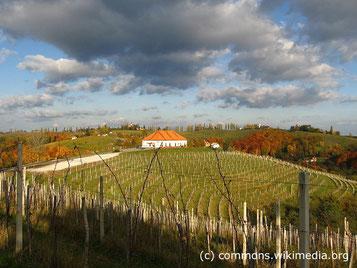 Dienstag: Es geht über die Grenze nach Slowenien, hier auch in den bekannten Weinort Jeruzalem.