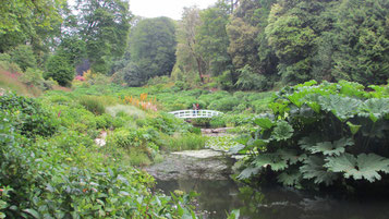 Mittwoch: Rundgang durch den Trebah Garden mit einheimischen und subtropischen Pflanzen zwischen steilen Hügeln.