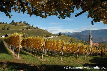 Samstag: Nachmittag fahren wir die Südtiiroler Weinstraße entlang und verkosten auch typische südtiroler Weine, z.B. Traminer.