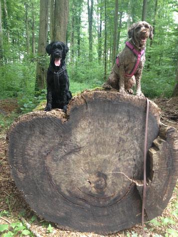 Zwei Hunde liegen beieinander, dem Dritten ist es zu eng.