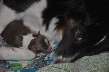 Die fürsorgliche Mama mit dem zwei Tage alten Ico.