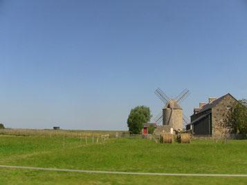 可愛い風車