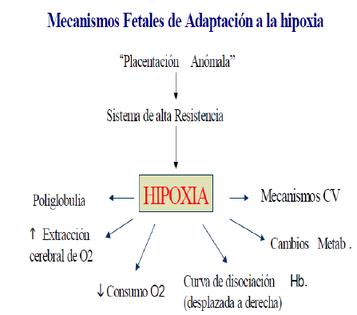 Mecanismos de adaptación fetal a la hipoxia