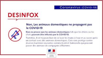 Affiche les animaux ne propagent pas le COVID-19 par coach canin 16 éducateur canin en charente