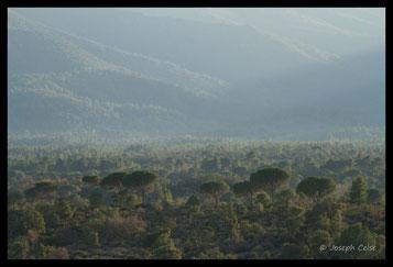 La plaine des Maures, sa faune et sa flore