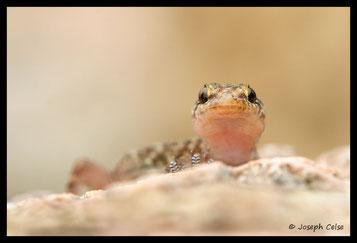 Autres reptiles