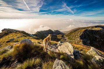 Ferien mit Hund in Südeuropa