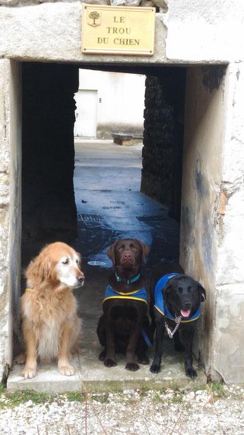 """Les trois chiens se tiennent à l'entrée d'un passage en pierre appelée """"le trou du chien"""""""
