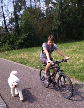 Hugo en VTT avec Medley en laisse spécial vélo à coté