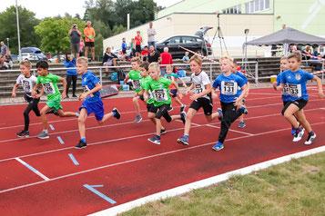 800m-Start beim Beeskower Abendsportfest (Foto: Fischbach)