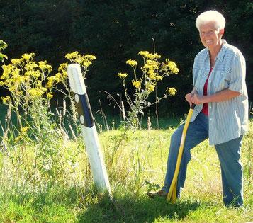 Marianne Stöckeler beim Ausstechen des Raukenblättrigen Kreuzkraut