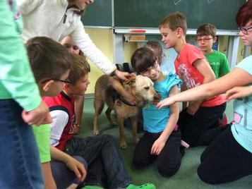 Streicheleinheiten für unseren Schulhund