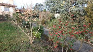 sylva-jardins-paysages.fr-Tailles arbustives raisonnées- vue d'ensemble